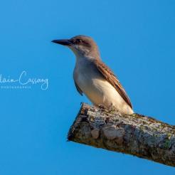 photo alain cassang - guadeloupe - faune & flore 3