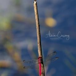 photo alain cassang - guadeloupe - faune & flore 4