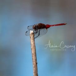 photo alain cassang - guadeloupe - faune & flore 5