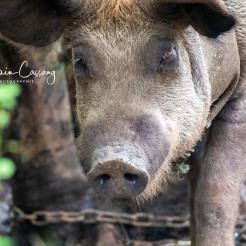 photo alain cassang - guadeloupe - faune & flore 8