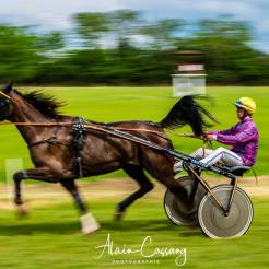 photo alain cassang guadeloupe - perigord - chevaux 2
